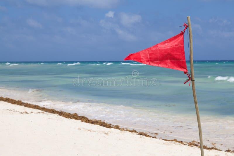 Alerte sur la plage tropicale photo libre de droits