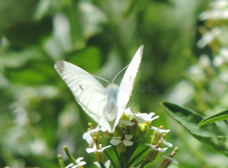 aleta da borboleta imagens de stock