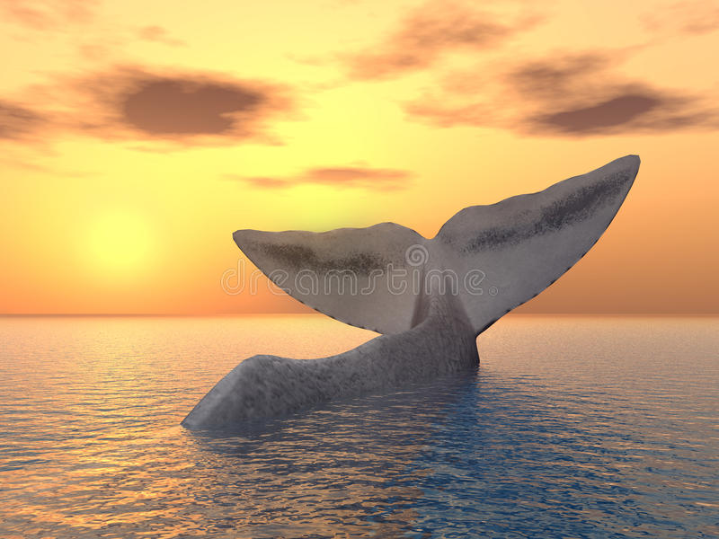 Aleta de cola de una ballena de esperma libre illustration