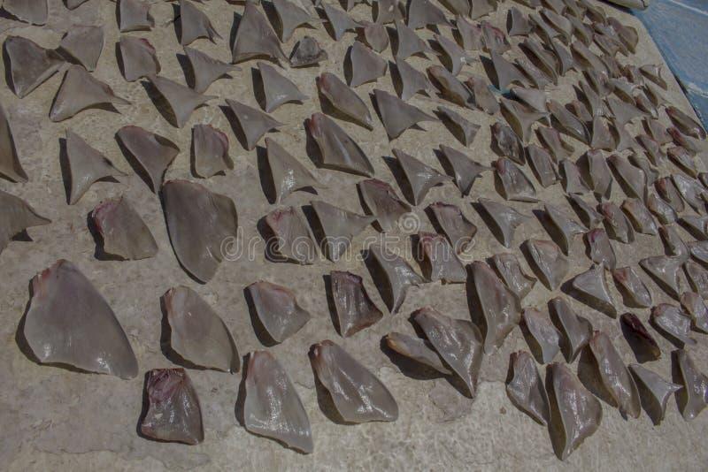 Aletas do tubarão fotografia de stock