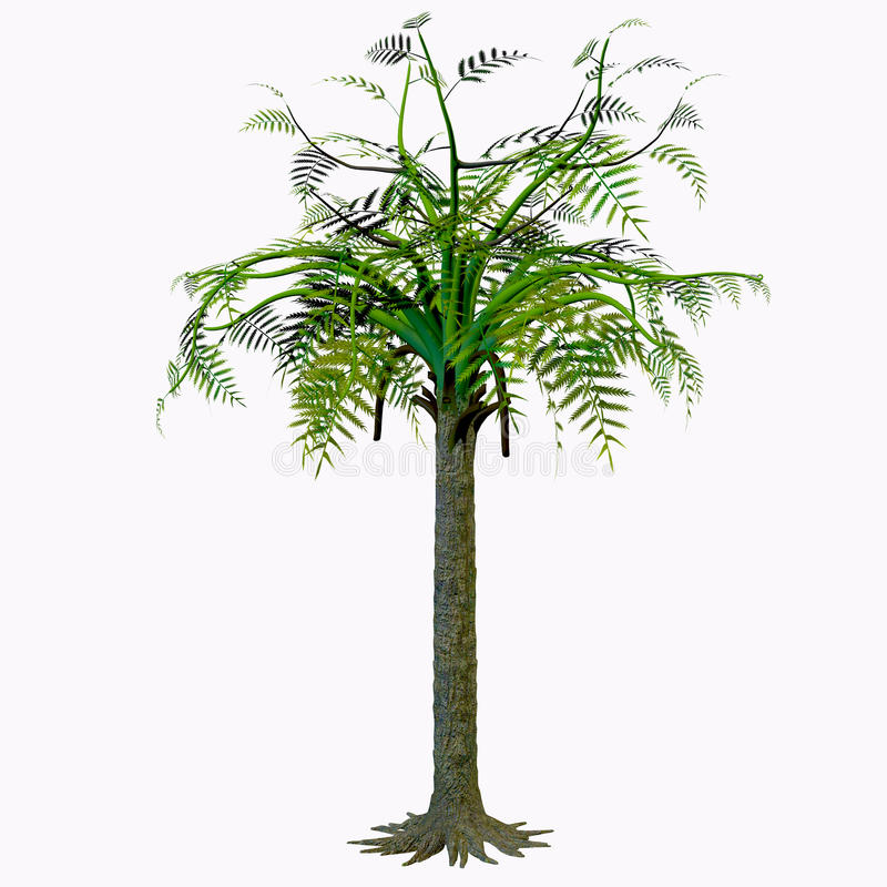 Alethopteris Tree. Alethopteris zeilleri is a foliar morphospecies tree from a medullosalean plant that grew widely in the Stephanian and Early Permian of vector illustration