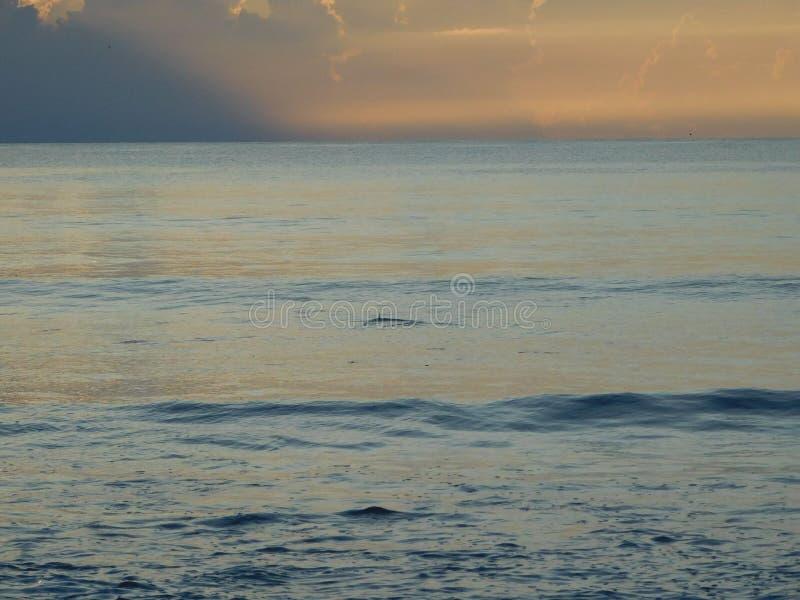 Aletta dello squalo durante l'alba in Florida fotografia stock libera da diritti