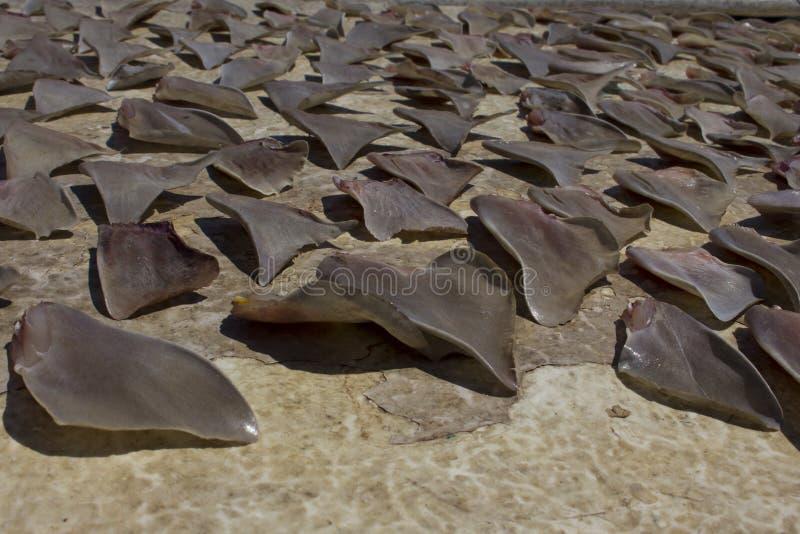 Alette dello squalo fotografia stock