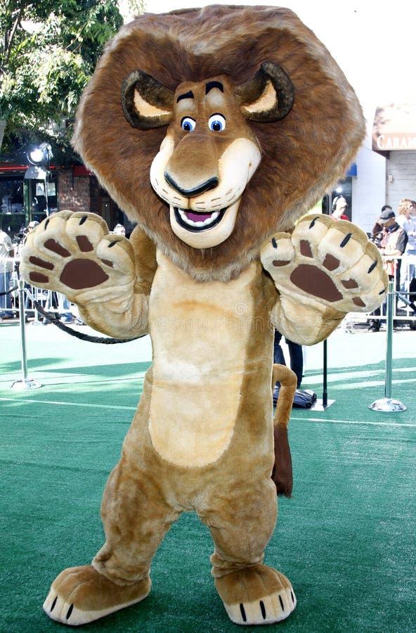Alex (il leone) immagine stock