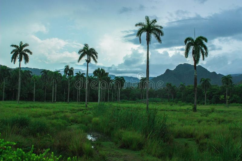 Alexander Humbold National Park in Cuba, close to Baracoa and Guantanamo stock image