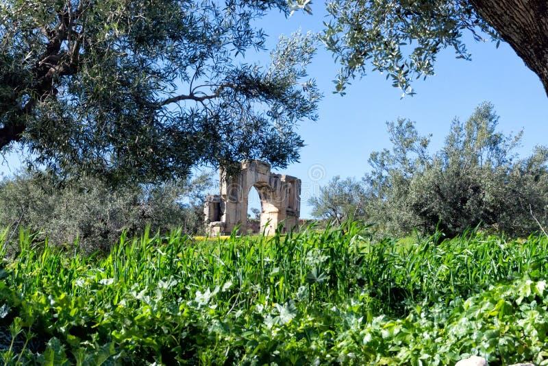 Alexander Severus`s Arch in Dougga, Tunisia. View of Alexander Severus's arch between olive trees in Dougga, Tunisia royalty free stock photography