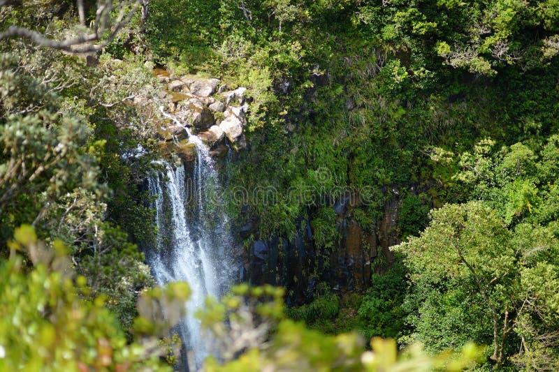 Alexandra escénico cae en la selva de Mauricio imagenes de archivo