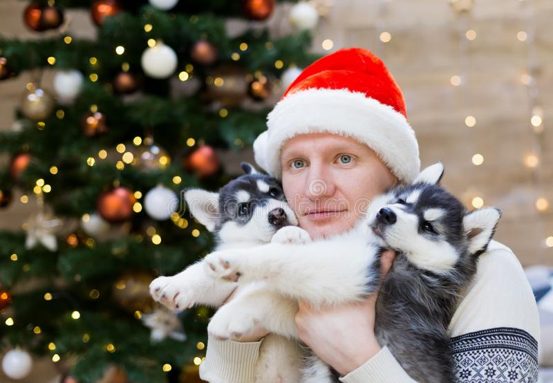 Alexey. Man and puppy husky, Santa Claus hat, close up royalty free stock photography
