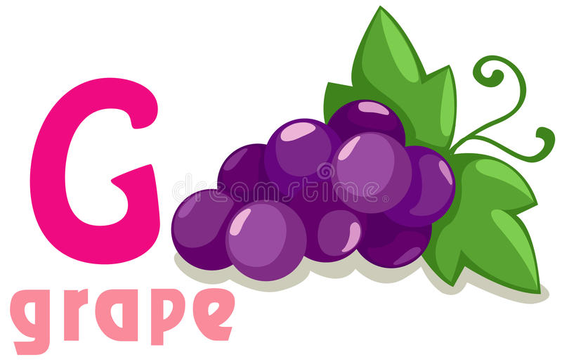 Alfabet G voor druif vector illustratie