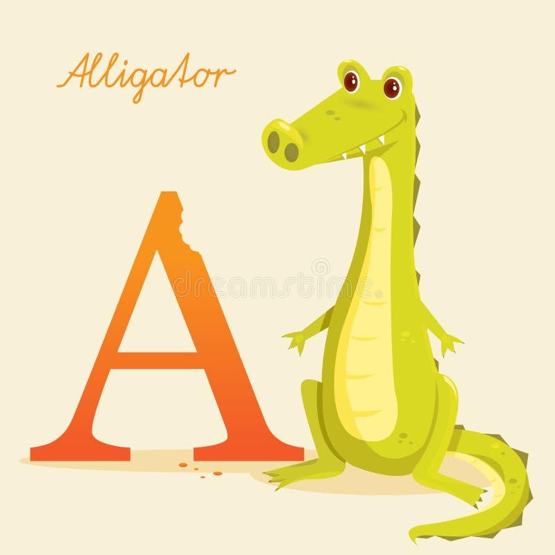 Alfabeto animal com jacaré ilustração royalty free