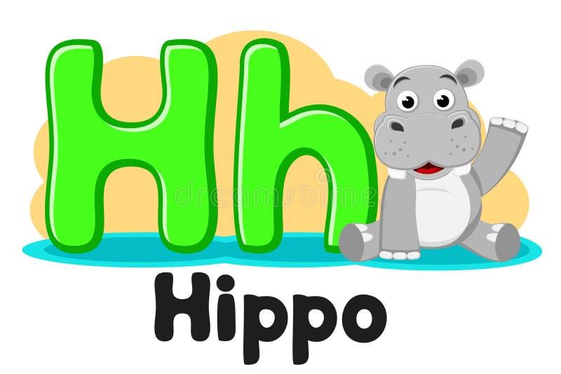 Alfabeto com animais, hipopótamo que senta-se em uma poça da letra Hh em um branco Educa??o pr?-escolar ilustração do vetor