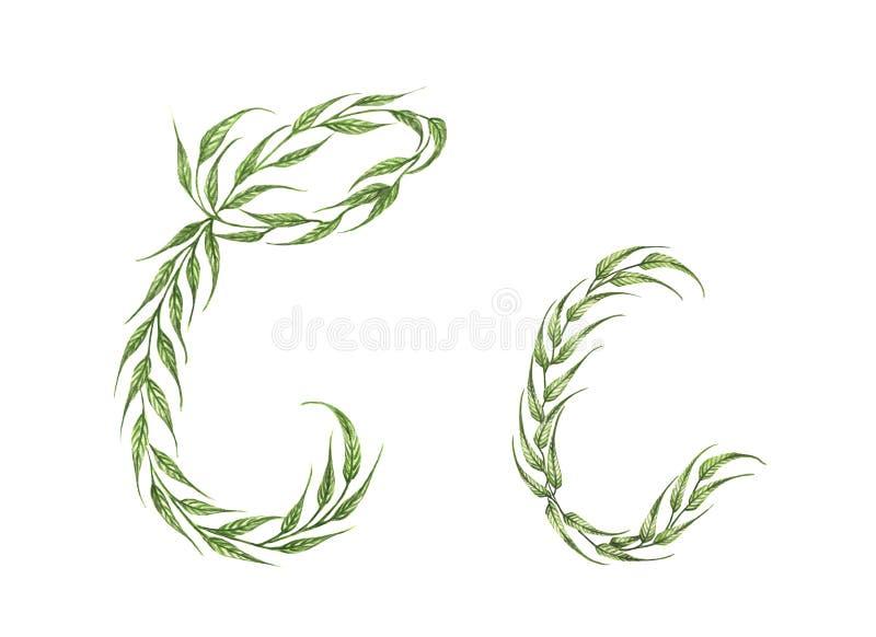 Alfabeto delle foglie verdi con la lettera C nel maiuscoletto e nella grande lettera maiuscola illustrazione vettoriale