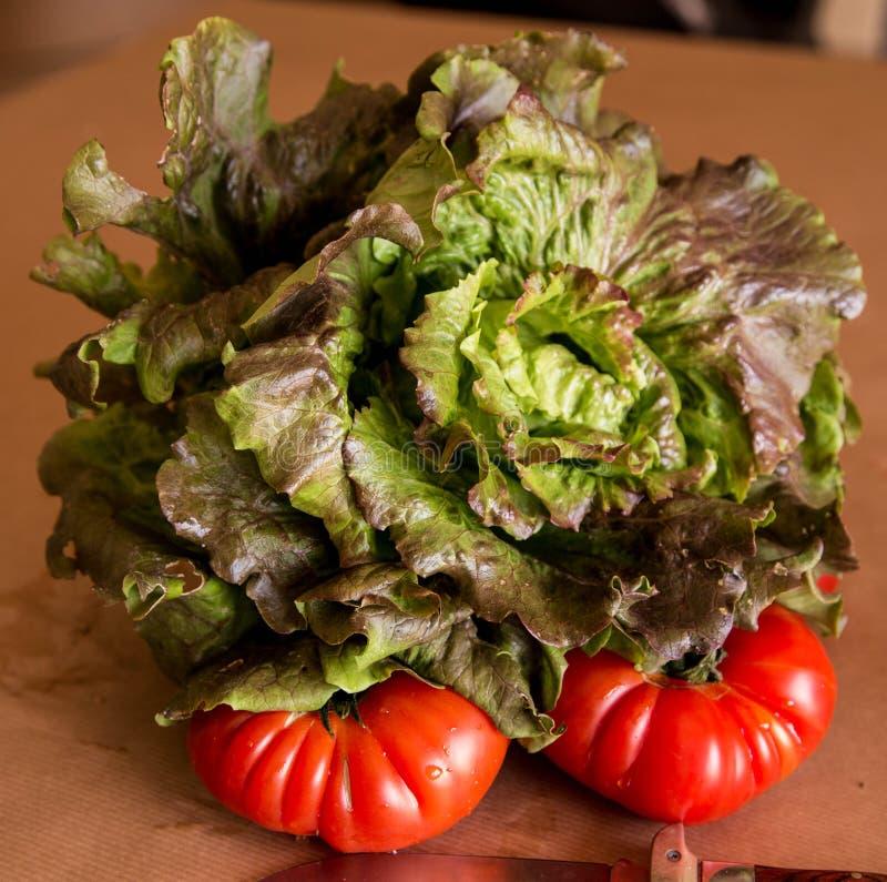 Alface com tomates imagem de stock