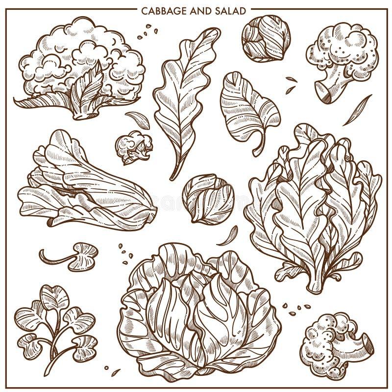 A alface da salada e os vegetais das couves vector ícones do esboço ilustração royalty free