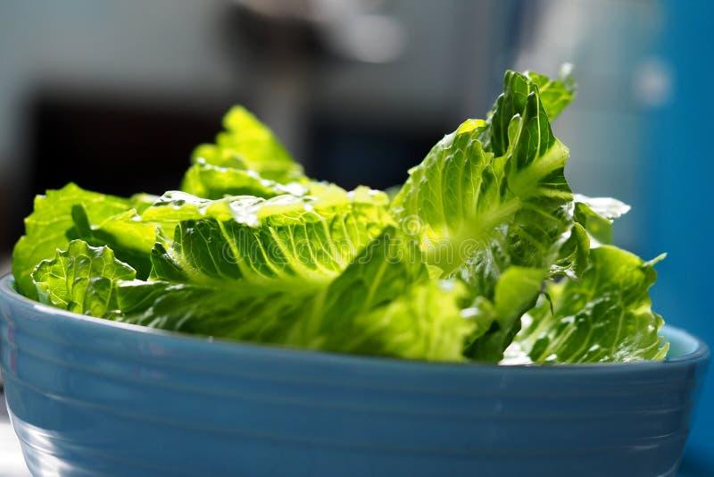 Alface de alface romana de cos da salada verde cortada fotografia de stock royalty free