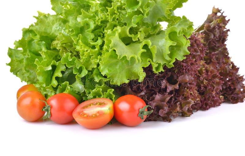 Alface e tomate frescos no fundo branco imagem de stock royalty free