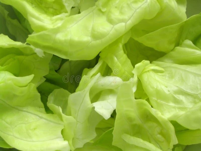 Alface fresca #2 foto de stock royalty free