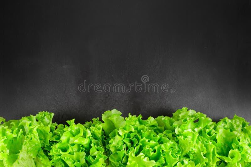 A alface fresca sae da beira sobre a placa do preto do giz fotografia de stock royalty free