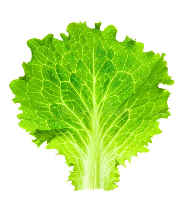 Alface fresca/uma folha isolada no branco imagens de stock royalty free