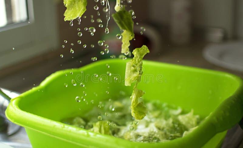 Alface lavada e sanitized Gotas da água e das partes de alface no movimento fotografia de stock
