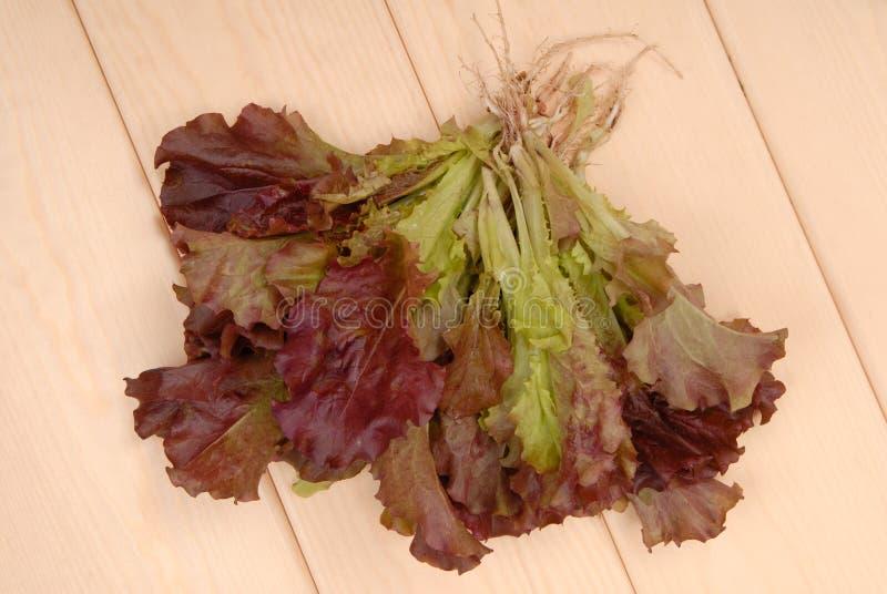 Alface verde e roxa, salada; salada vermelha verde do ANG, sal fresco imagens de stock royalty free