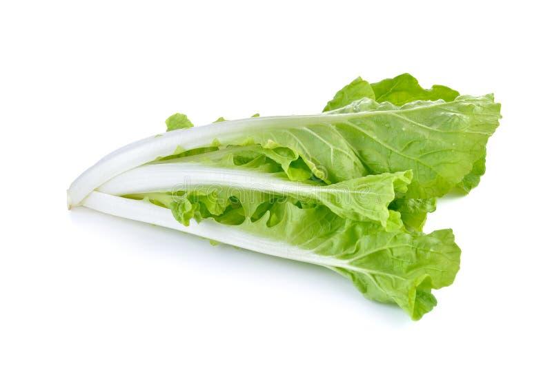 Alface verde fresca cortada no fundo branco imagens de stock royalty free