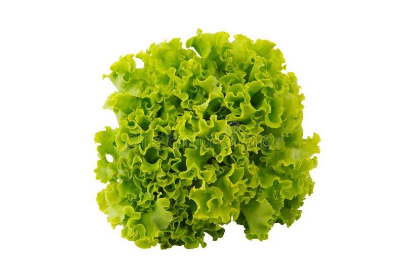 Alface verde fresca isolada em um branco imagens de stock
