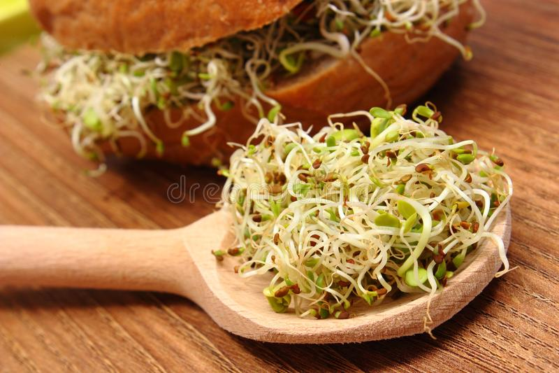 A alfafa e o rabanete brotam no rolo de pão da colher e do wholemeal no fundo imagem de stock