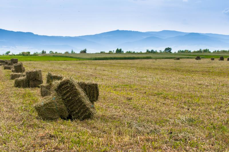 Alfalfa hay bale on fresh cutted agricultural field royalty free stock image