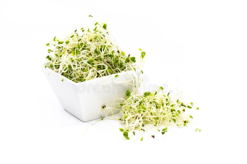 Alfalfa, red clover and radish sprouts mixture in white porcelain sauce dish. Alfalfa, red clover and raddish sprouts mixture in white porcelain sauce dish stock image