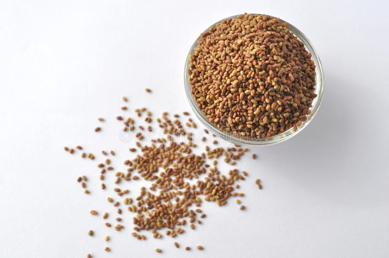 Alfalfa som spirar frömedicagoen som är sativa i en glass bunke som isoleras på vit, bästa sikt arkivfoto