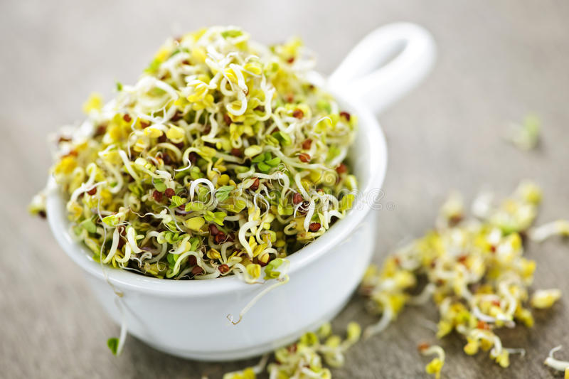 Download Alfalfa sprouts in a cup stock image. Image of plants - 13993337