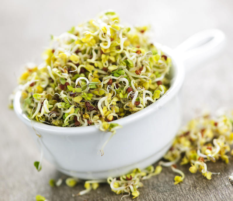 Alfalfa sprouts in a cup royalty free stock photography