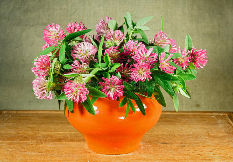 Alfalfa. Still life. Bouquet of meadow flowers royalty free stock image