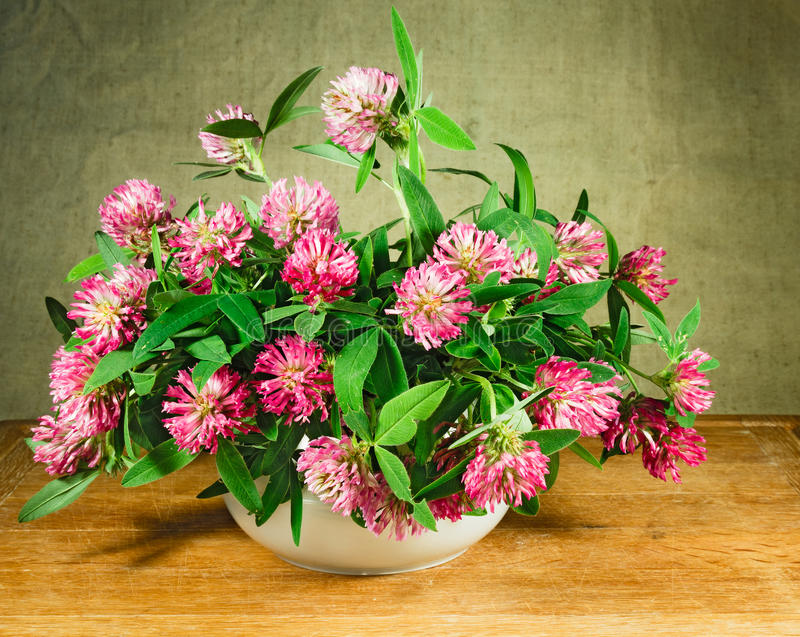 Alfalfa. Still life. Bouquet of meadow flowers royalty free stock photos