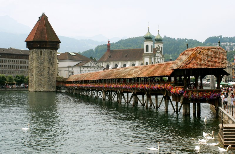 Alfalfa Suiza imágenes de archivo libres de regalías