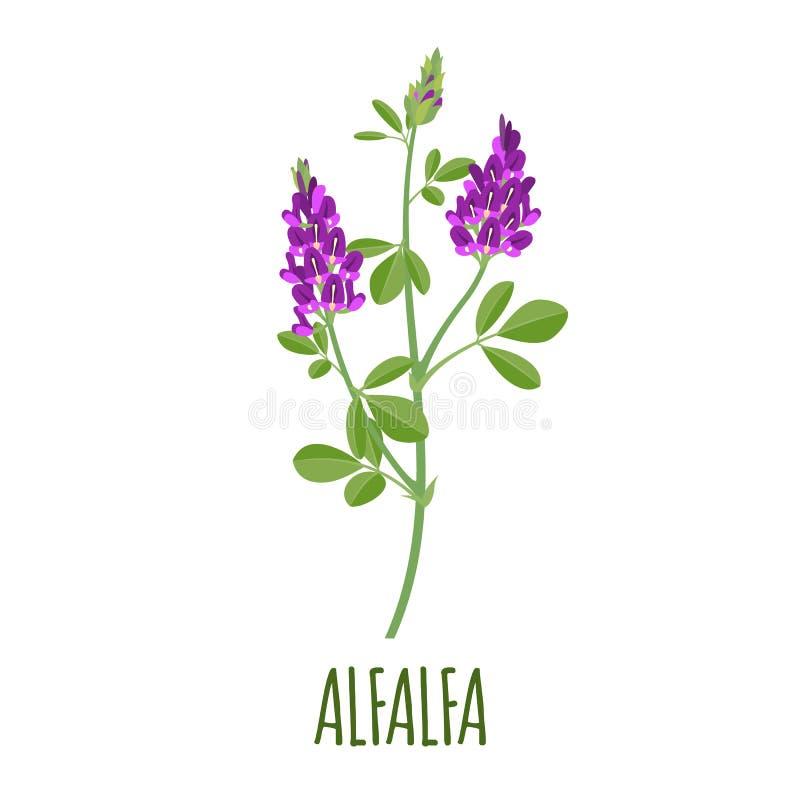 Alfalfasymbol i plan stil på vit bakgrund stock illustrationer
