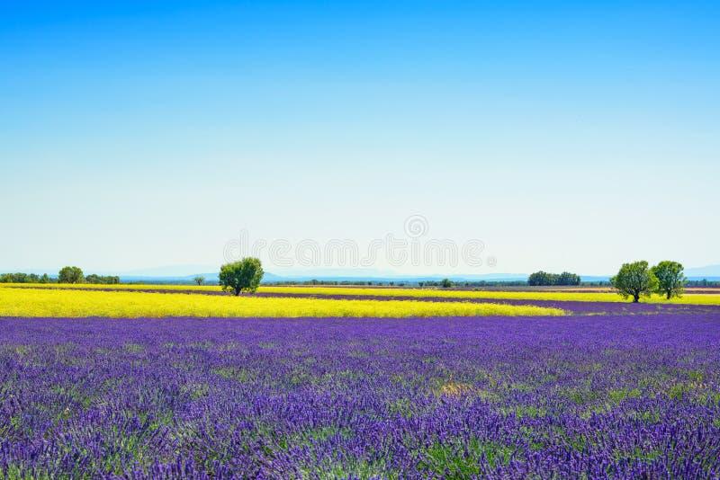 Alfazema, campo das flores amarelas e árvores de florescência Provence, Fra fotos de stock royalty free