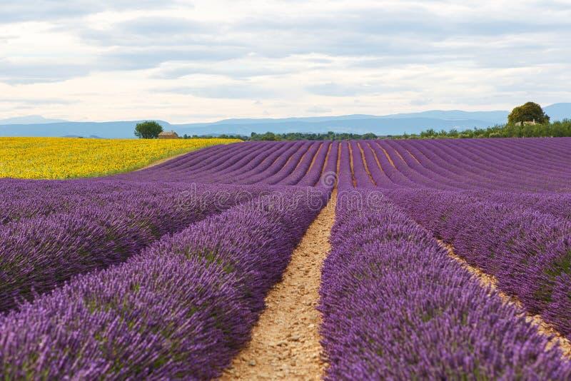 A alfazema coloca perto de Valensole em Provence, França imagem de stock