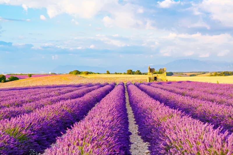 A alfazema coloca perto de Valensole em Provence, França fotografia de stock