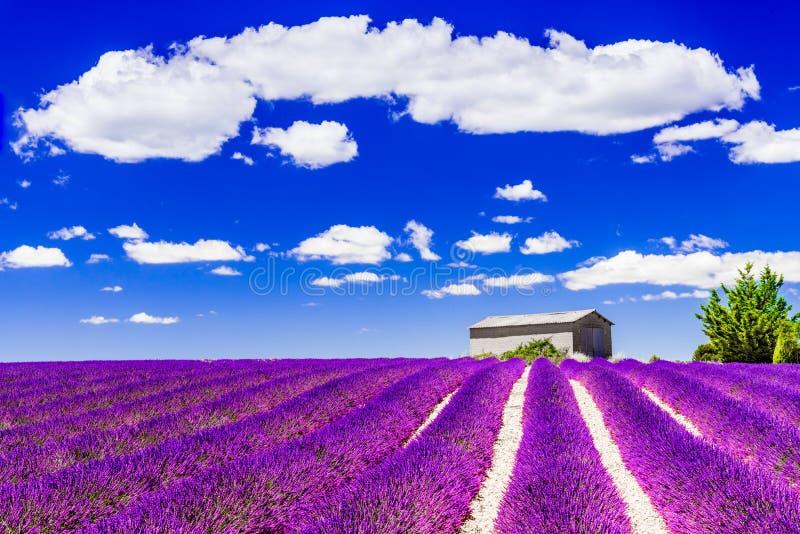 Alfazema de Valensole em Provence, Fran?a fotografia de stock royalty free