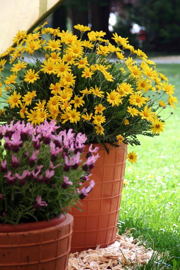 Alfazema e flores no flowerpot cheramic fotos de stock royalty free