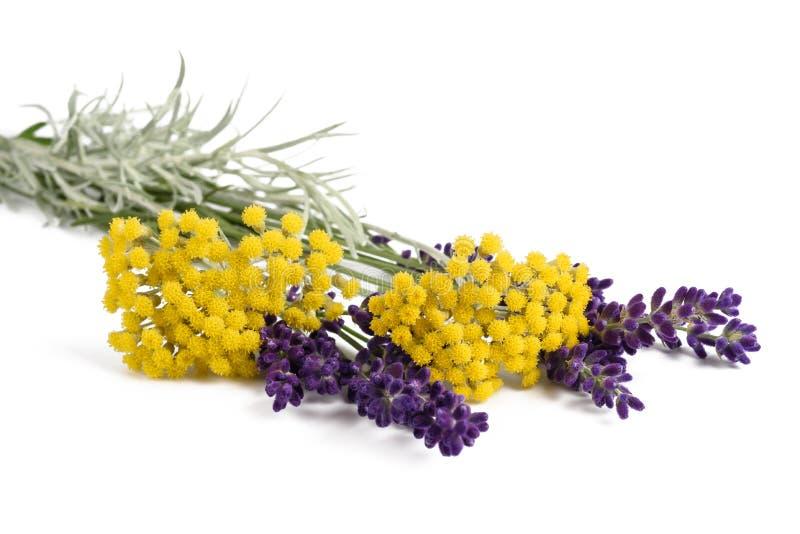 Alfazema e helichrysum fotos de stock