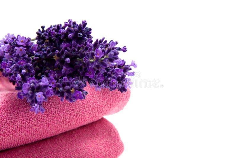 Alfazema em toalhas imagens de stock
