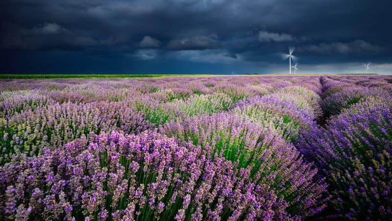 A alfazema floresce na primavera nuvens de tempestade e moinhos eolian fotografia de stock