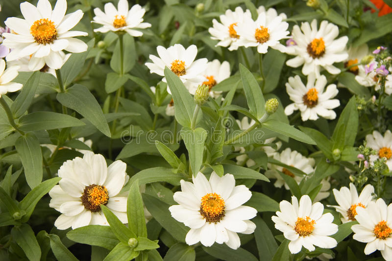 Alfombra de flores imagenes de archivo