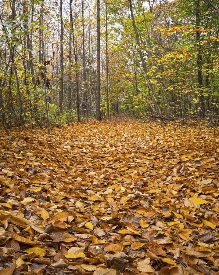 Alfombra de hojas foto de archivo