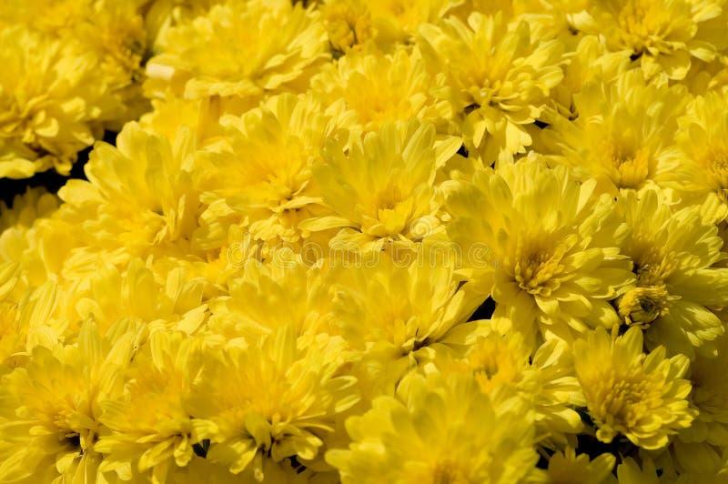 Download Alfombra de la momia foto de archivo. Imagen de botánico - 1289244
