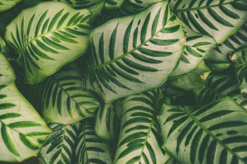Alfombra de plantas tropicales, fondo de la primavera del verano, modelo elegante teñido de selva imagenes de archivo