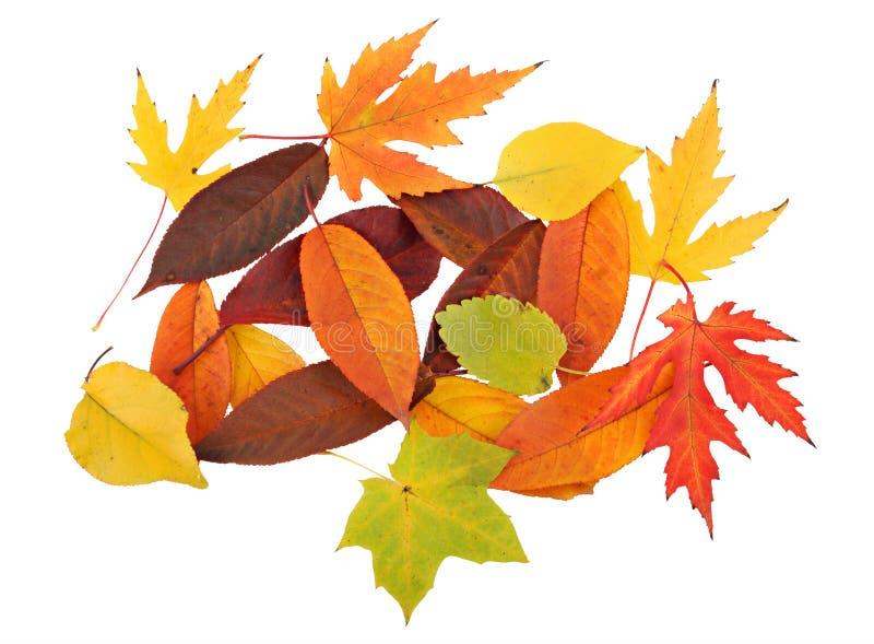 Alfombra del otoño de las hojas foto de archivo libre de regalías